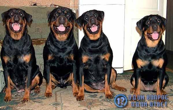 4 собаки