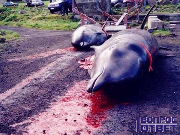 Закон об охоте на дельфинов