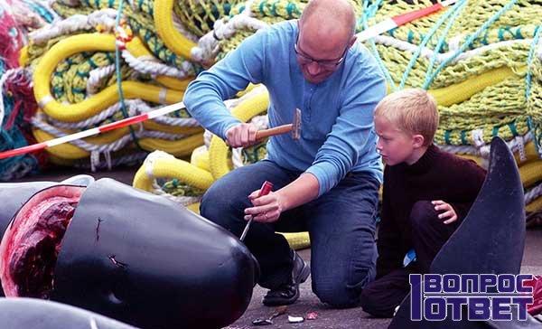 Папа показывает сыну как убить и разделать дельфина