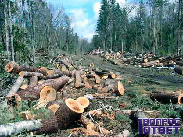 Вырубка 2 гектара леса без разрешений