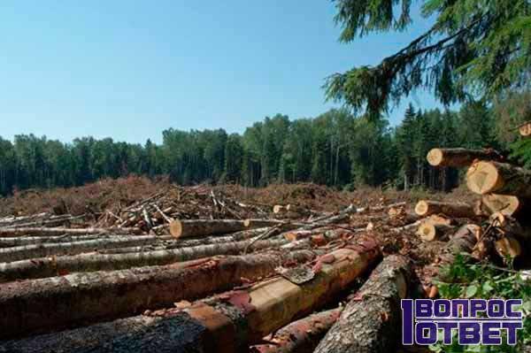 4 гектара вырубили незаконно в Уссурийске