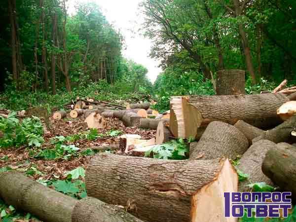 Незаконно вырубленный лес и последствия для природы