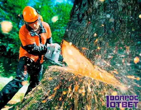 Незаконно вырубают лес на Урале