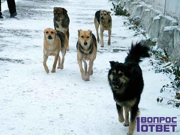 Отлов собак в городе