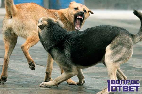 Куда лучше обращаться по отлову бродячих собак?