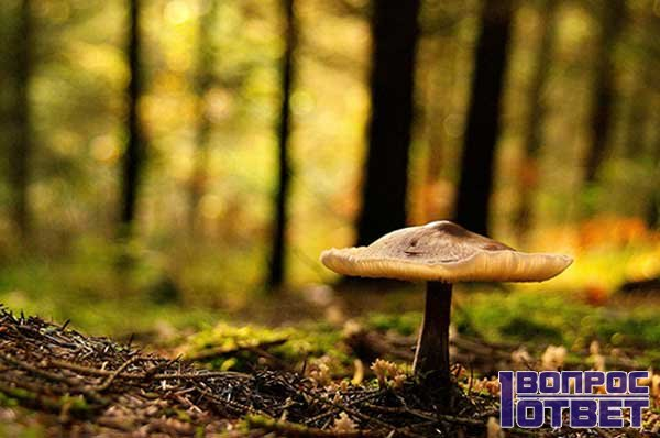 Гриб в лесу