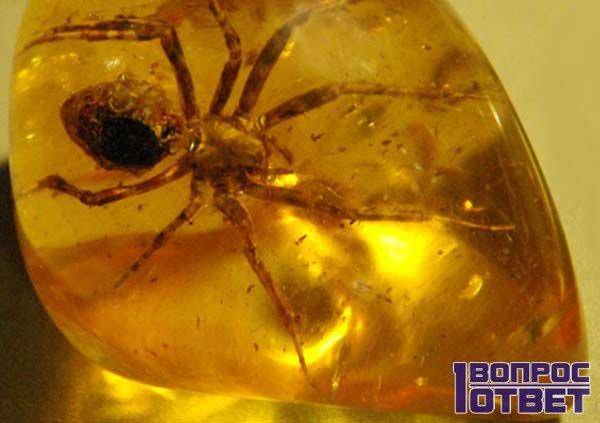 Лечебный янтарь с пауком