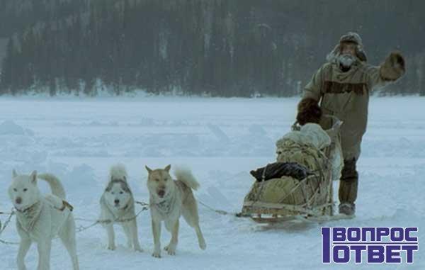 Траппер едет по льду на охоту