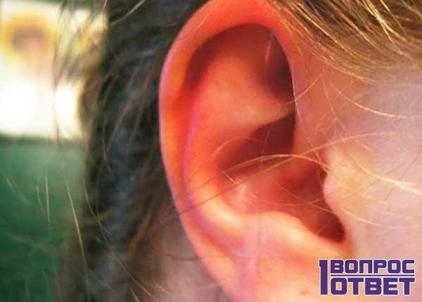 Медицина и органы слуха человека