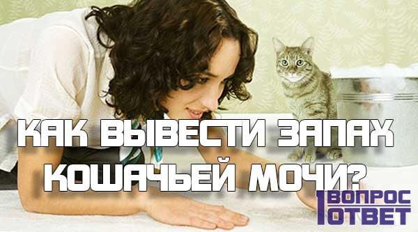 Как и чем можно вывести запах кошачьей мочи?