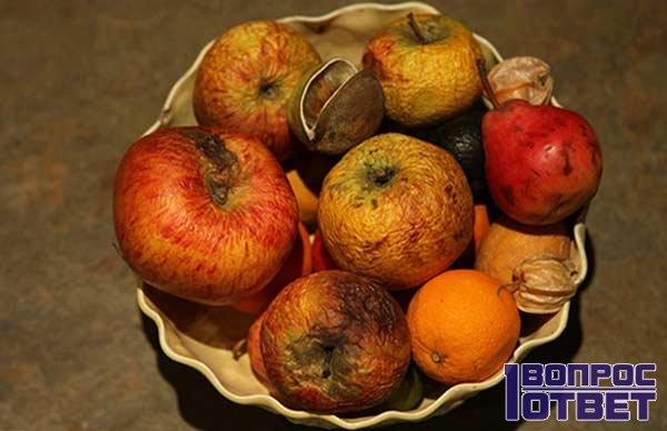 Гнилые фрукты - источники мошки