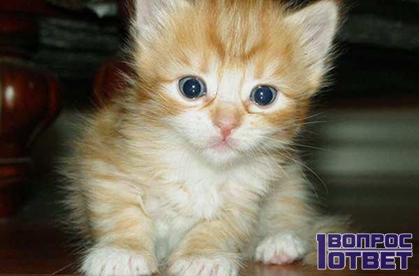 Секреты правильного питания котят