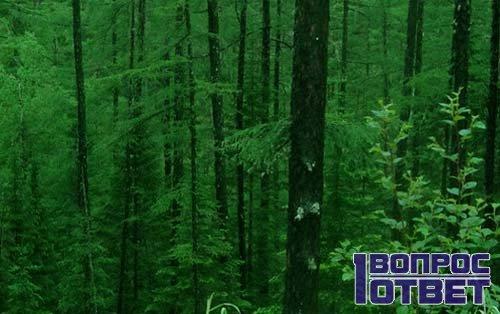 Состав лесного воздуха