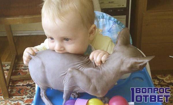 Голодный малыш ест кошку