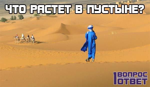 Что растет в пустыне?