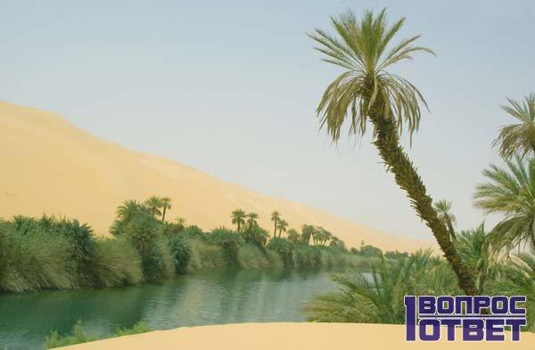 Деревья и кустарники в пустынных песчаных местах