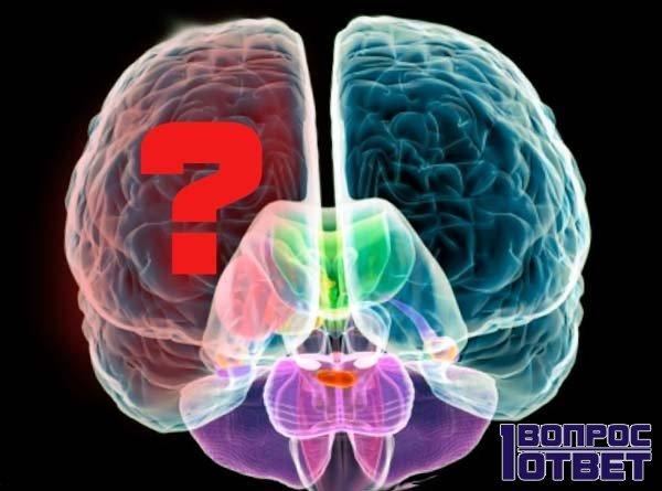 Уникальность головного мозга