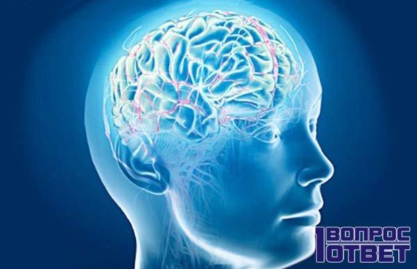Устройство нервной системы