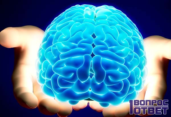Основной орган мышления живого существа