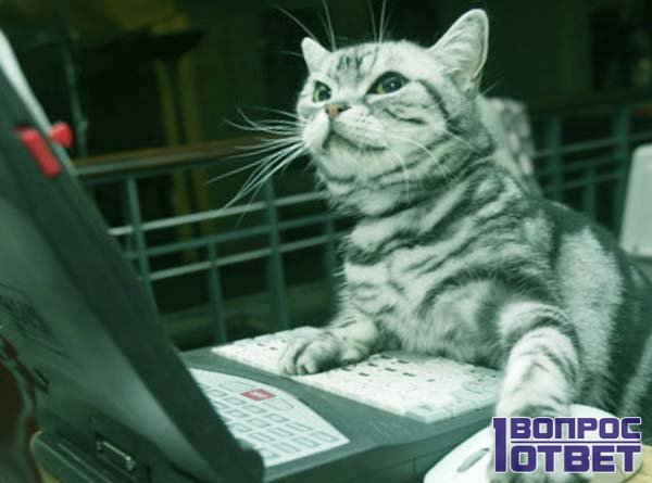 Кот при создании аккаунта на ноутбуке