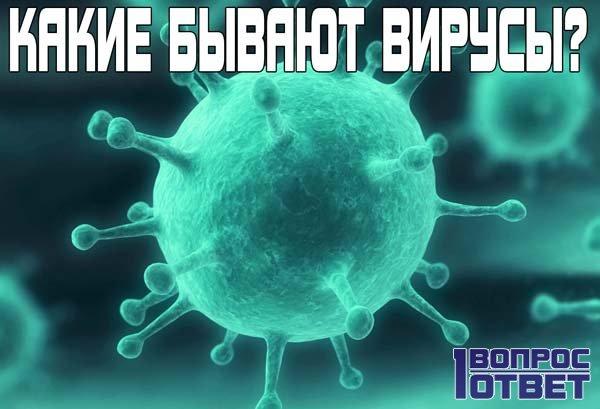 Какие бывают вирусы?