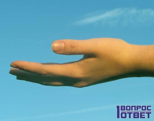 Ладонь руки