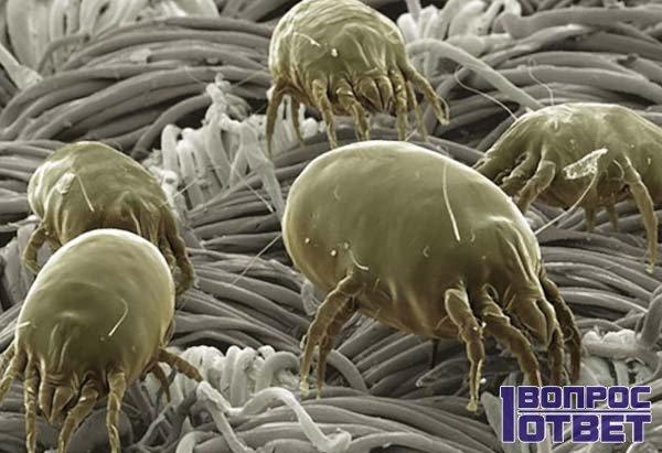 Пылевой клещ на ткани