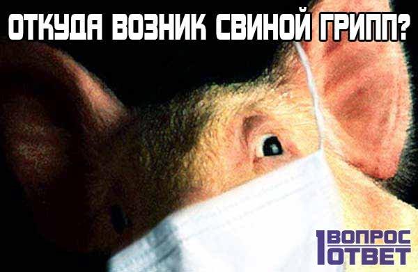 Откуда появился свиной грипп?