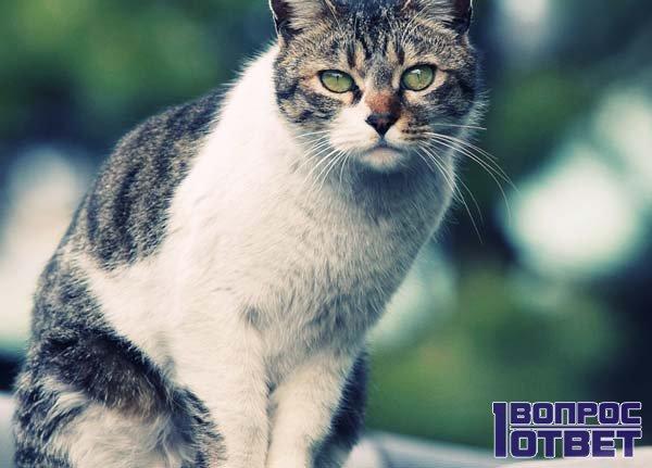 Хмурый взгляд кошки