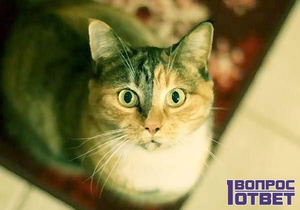 Зрительный контакт с котом