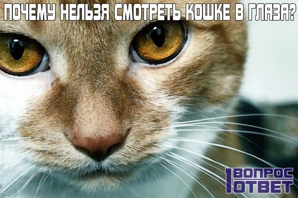 Почему не нужно смотреть в глаза кошке?
