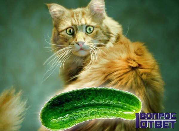 Кошка в панике