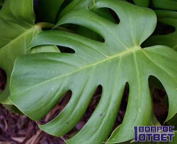 Резной лист растения