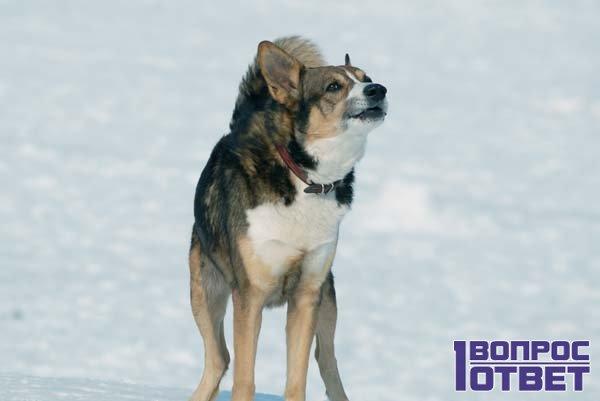 Недовольная собака на снегу