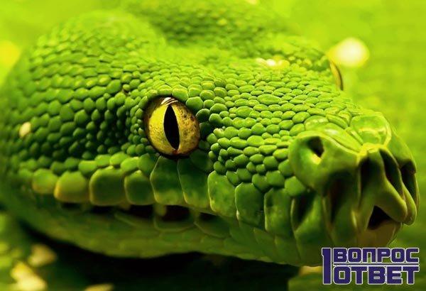 Неприятное зеленое пресмыкающееся