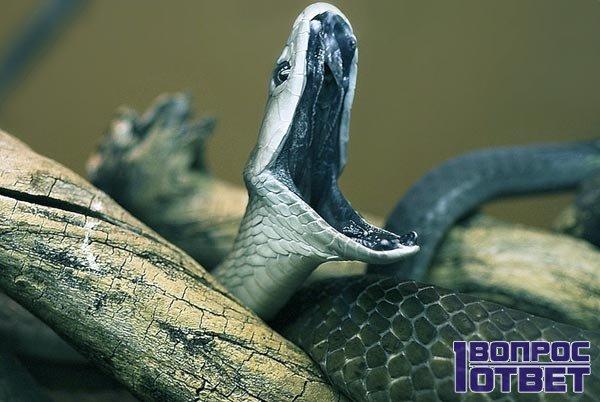 Большая и злобная змея во сне
