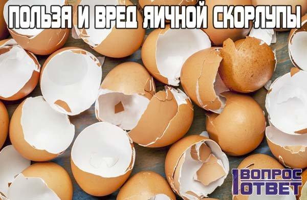 В чем польза и вред яичной скорлупы?
