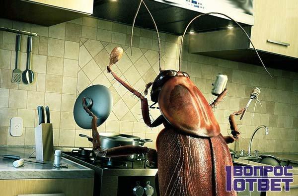 Таракан в квартире на кухне