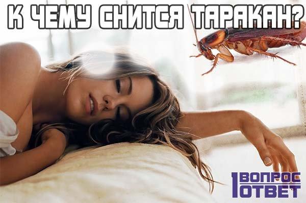 К чему может присниться таракан женщине?