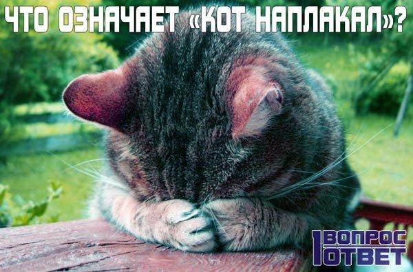 Что означает «кот наплакал»?