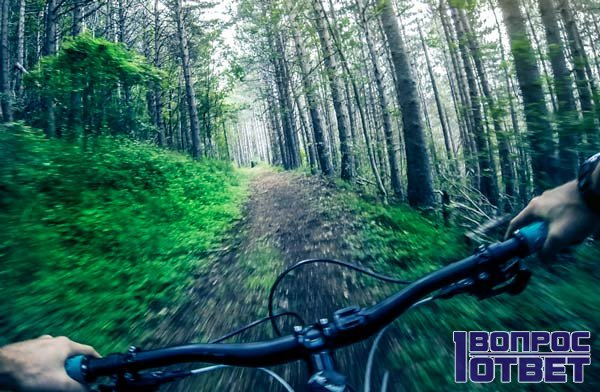Эффект дежавю в лесу