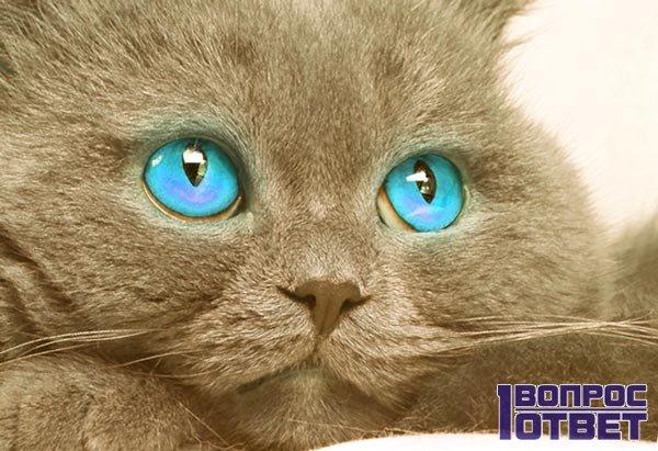 Не нужно наказывать котов