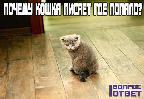 Почему кошка стала гадить где попало?