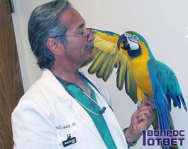 Исследование попугая
