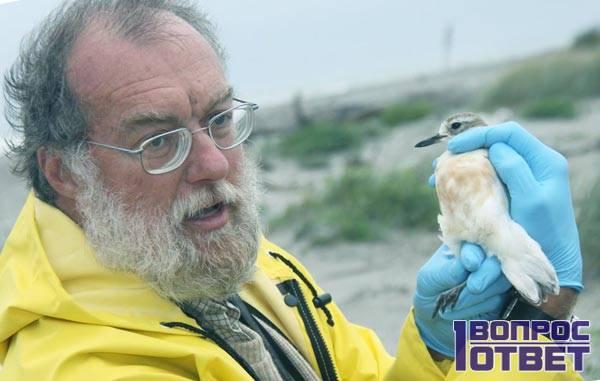 Старый опытный орнитолог