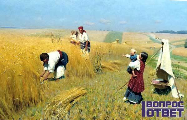 Предки выращивали пшено