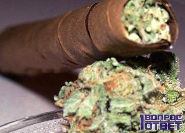 Зеленый сорт табака