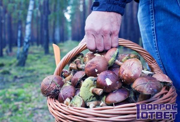 Набрал только съедобных грибов