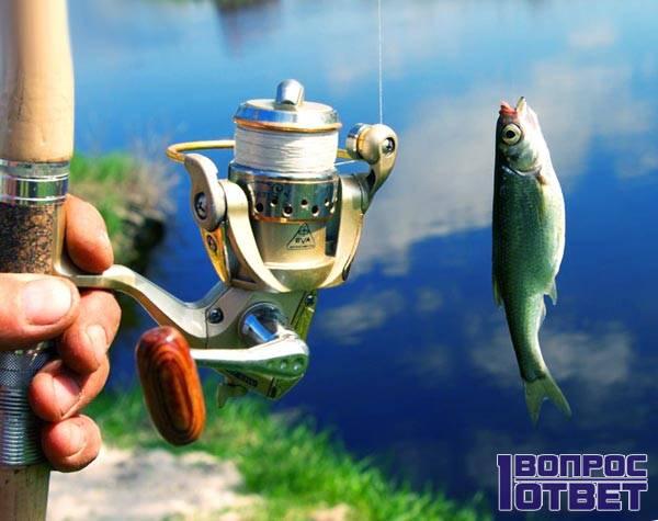 Рыбалка - приятное хобби
