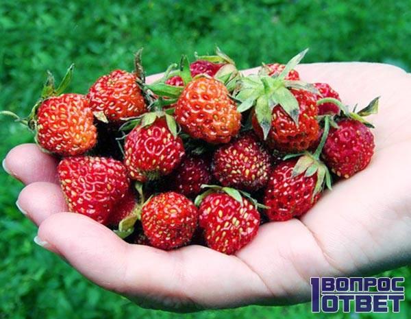 Полезные ягоды в ладони
